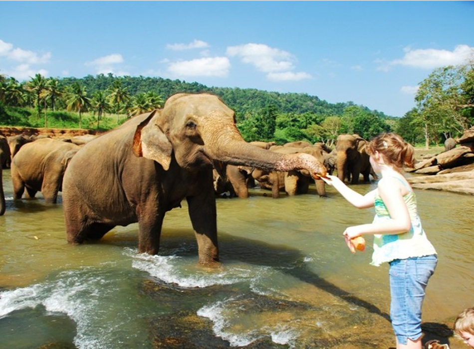 srilanka tour package, colombo tour package , srilanka honeymoon tour package , sri lanka holiday packages